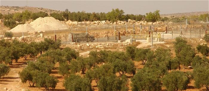 Oliviers, à l'arrière-plan, le Mur d'apartheid et l'armée d'occupation